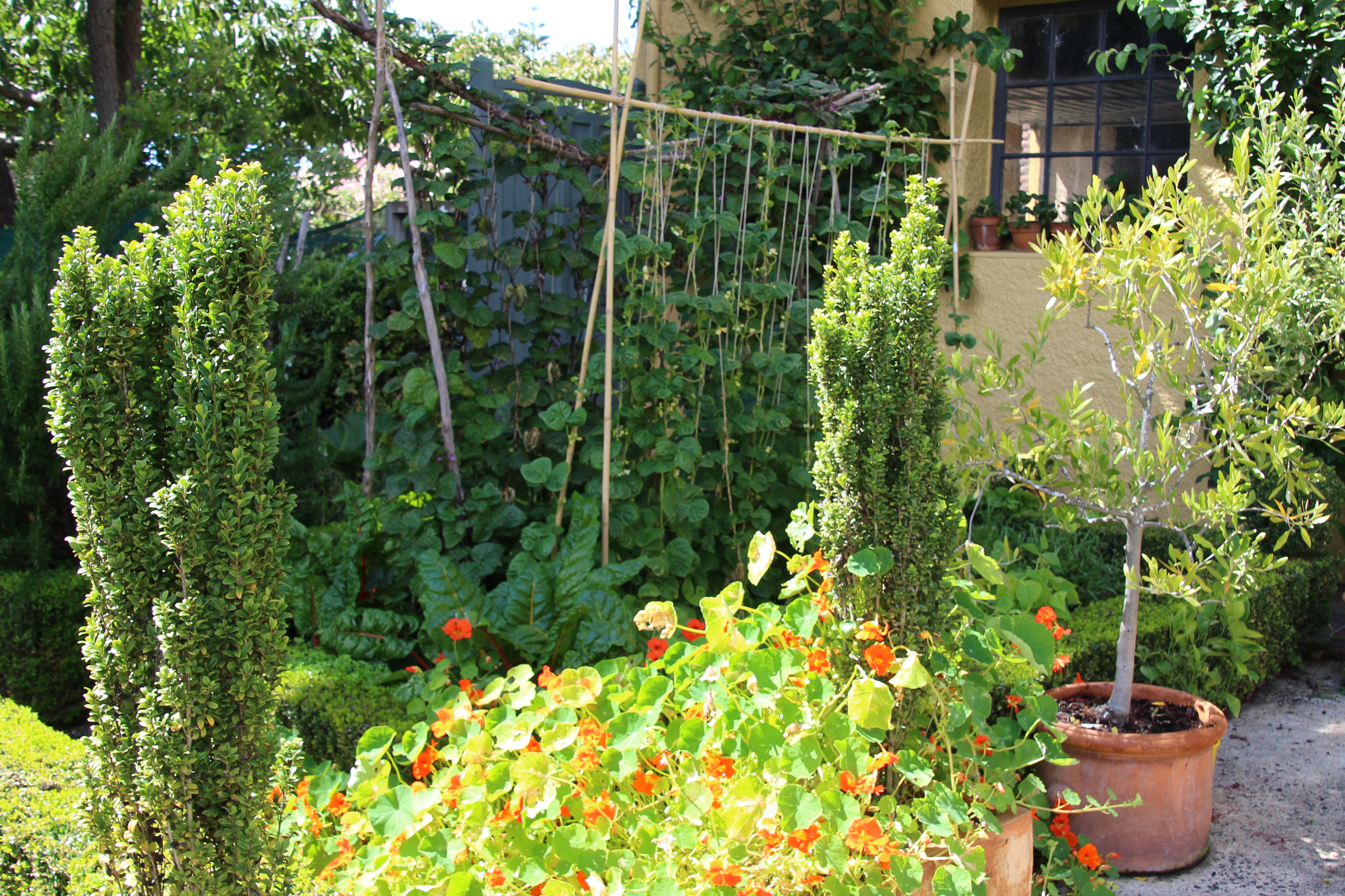 Summer vegetable gardening in small spaces is worth it for Summer vegetable garden
