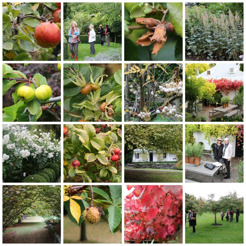 Janets garden